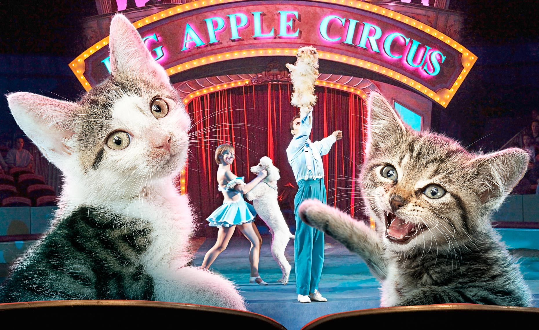Kitten at the Circus © Dale May
