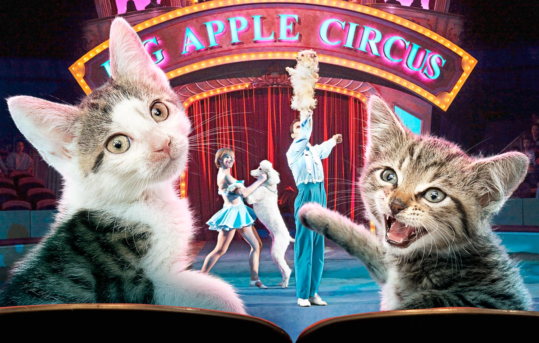 Kittens at the Circus